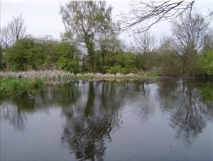 Lo stagno Millpond
