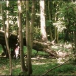 Fan film: Tales of Fili and Kili 11