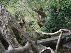 Il fiume Cole Bath BrookMoseley-Bog