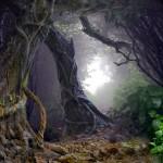 """Ivan Cavini: """"Treebeard"""""""