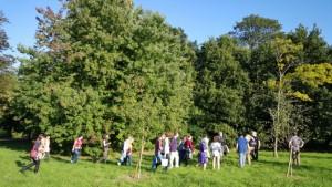 Oxford University Park: i due alberi nel 2015