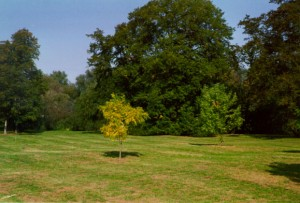Oxford: i due alberi Telperione Laurelin